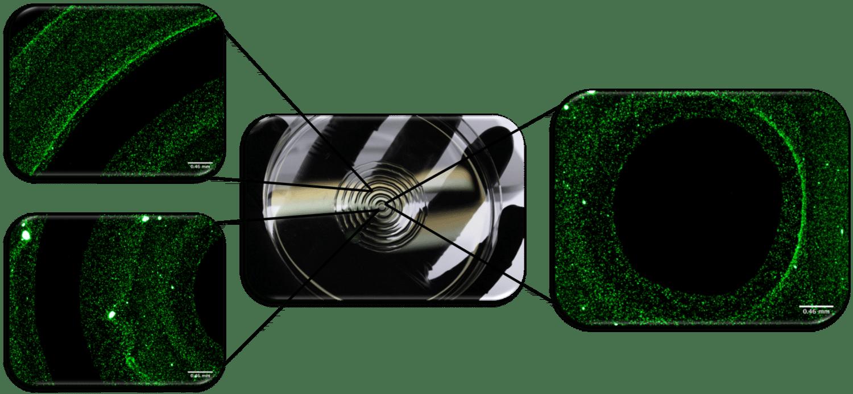 Bioprinting Collagen Layered Tissues
