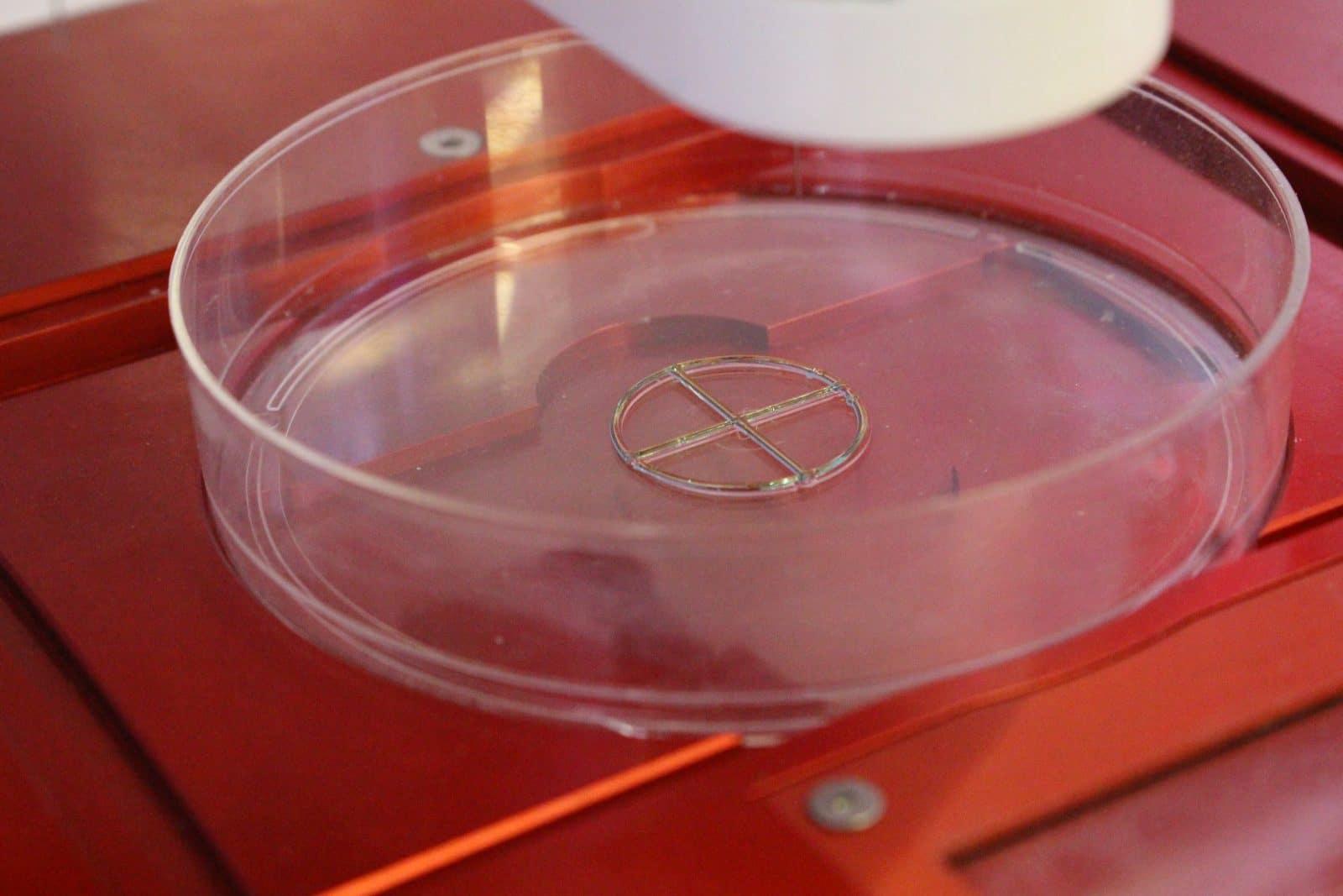 quickstart guide: allevi 3 - test bioprint