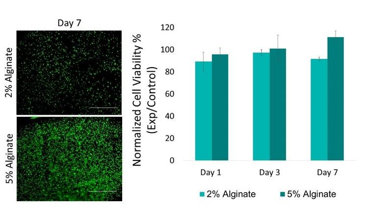bioprinting sodium alginate allevi viability report