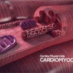 Allevi Author: GWU Bioprinting Heart Tissue