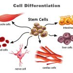 Reprogramming the Fate of Cells