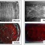 Allevi Author: Lattices vs Sheets for Cardiac Tissue Bioprinting