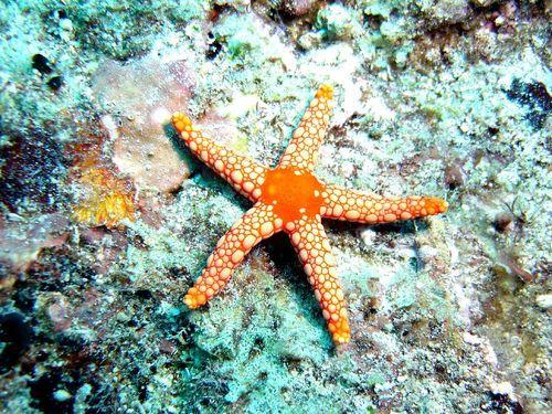 starfish regneration regenerative allevi