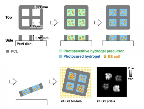 tohoku university allevi bioprinter bioprinted hydrogel imaging