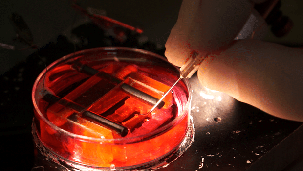 Scientists Create Beating Heart Tissue in a Lab Dish
