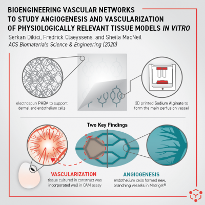 Angiogenesis and Vascularization Model from Allevi Authors