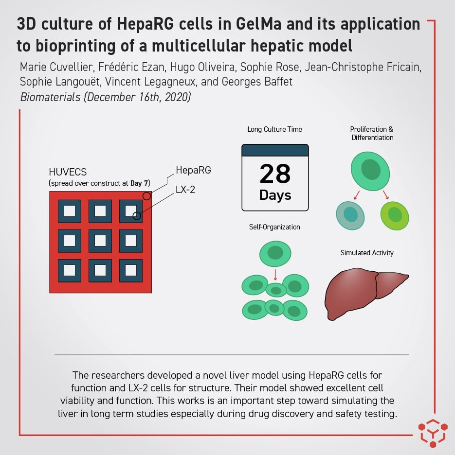 improved 3D liver model allevi author bioprinting